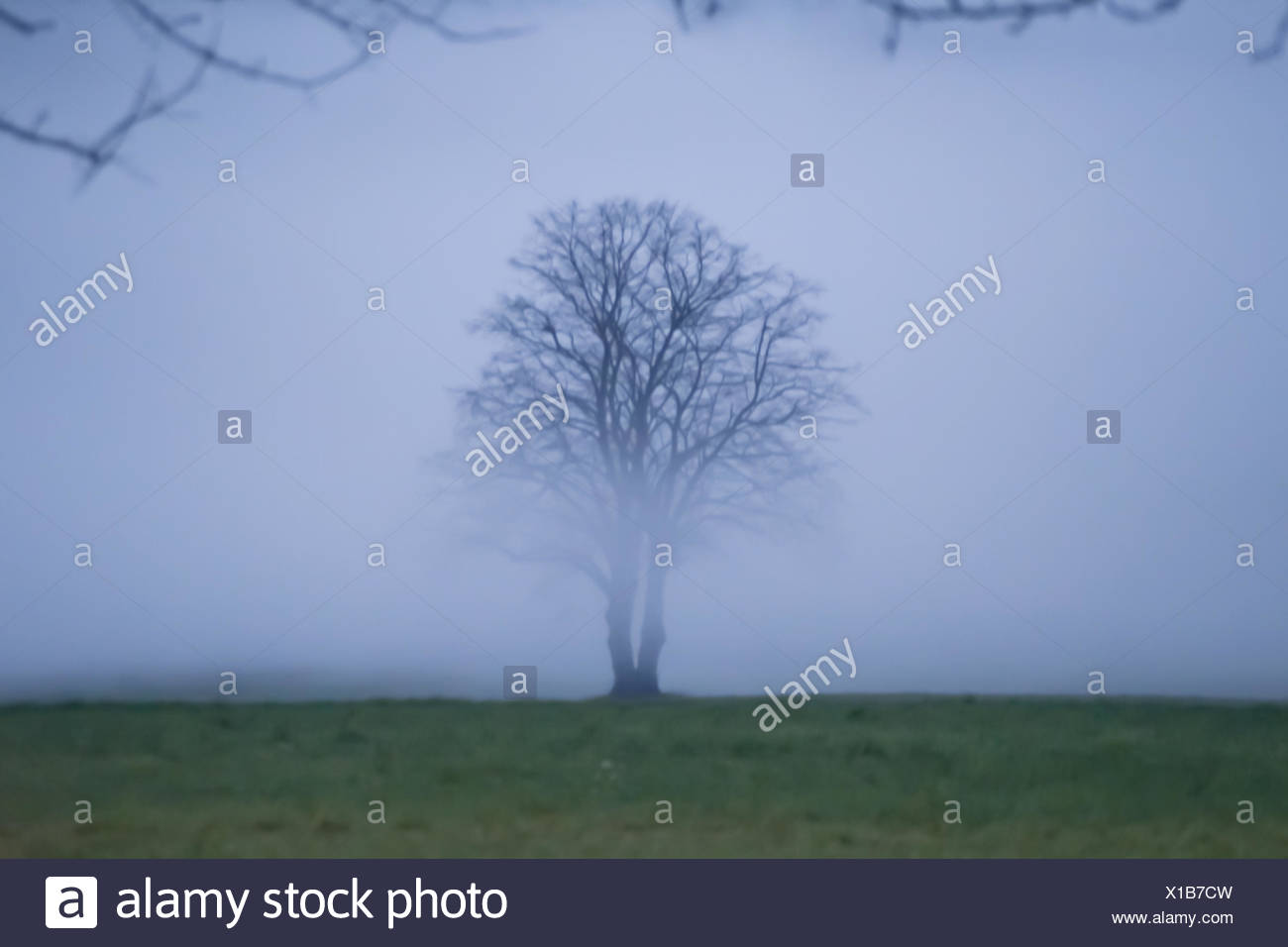 lonely tree in fog, blur - Stock Image