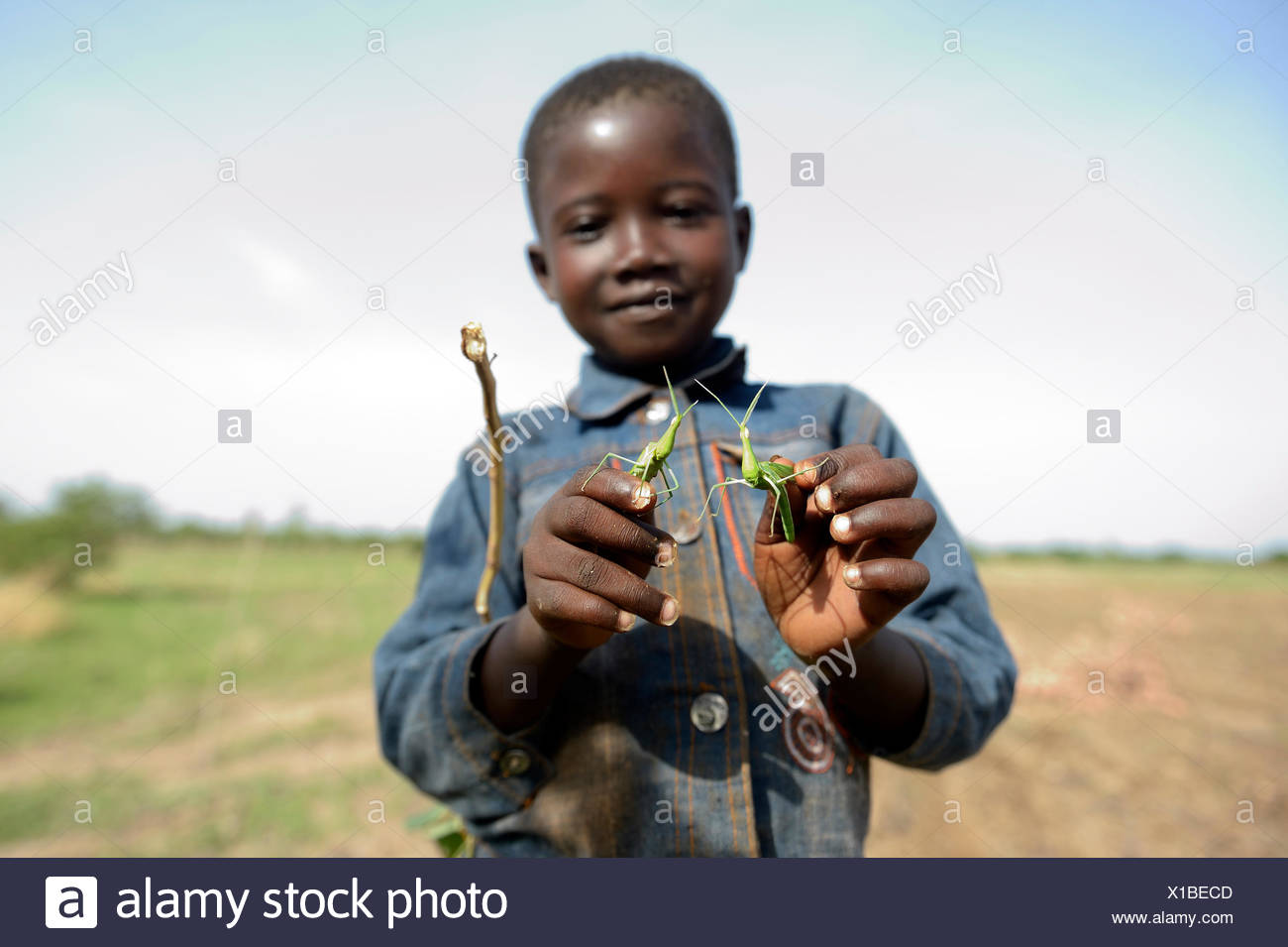 Boy, 7 years, with two mantises, Gomponsom, Passoré Province, Northern Region, Burkina Faso - Stock Image