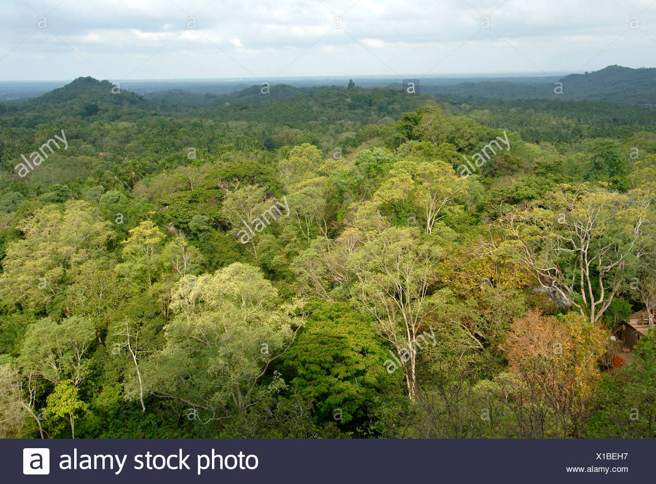 View from the Temple Mount Mulkirigala of tropical forests, deciduous trees, Ceylon, Sri Lanka, South Asia - Stock Image