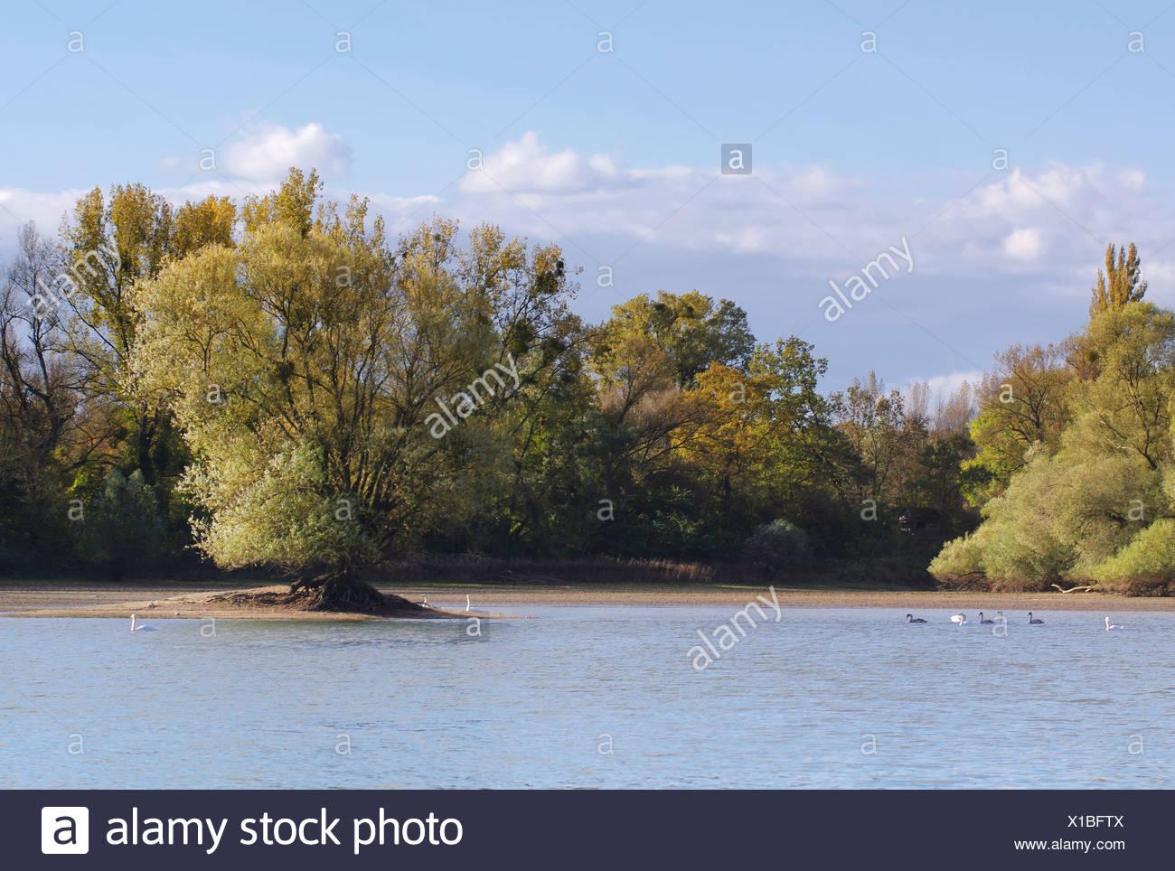 old river rhine Stock Photo