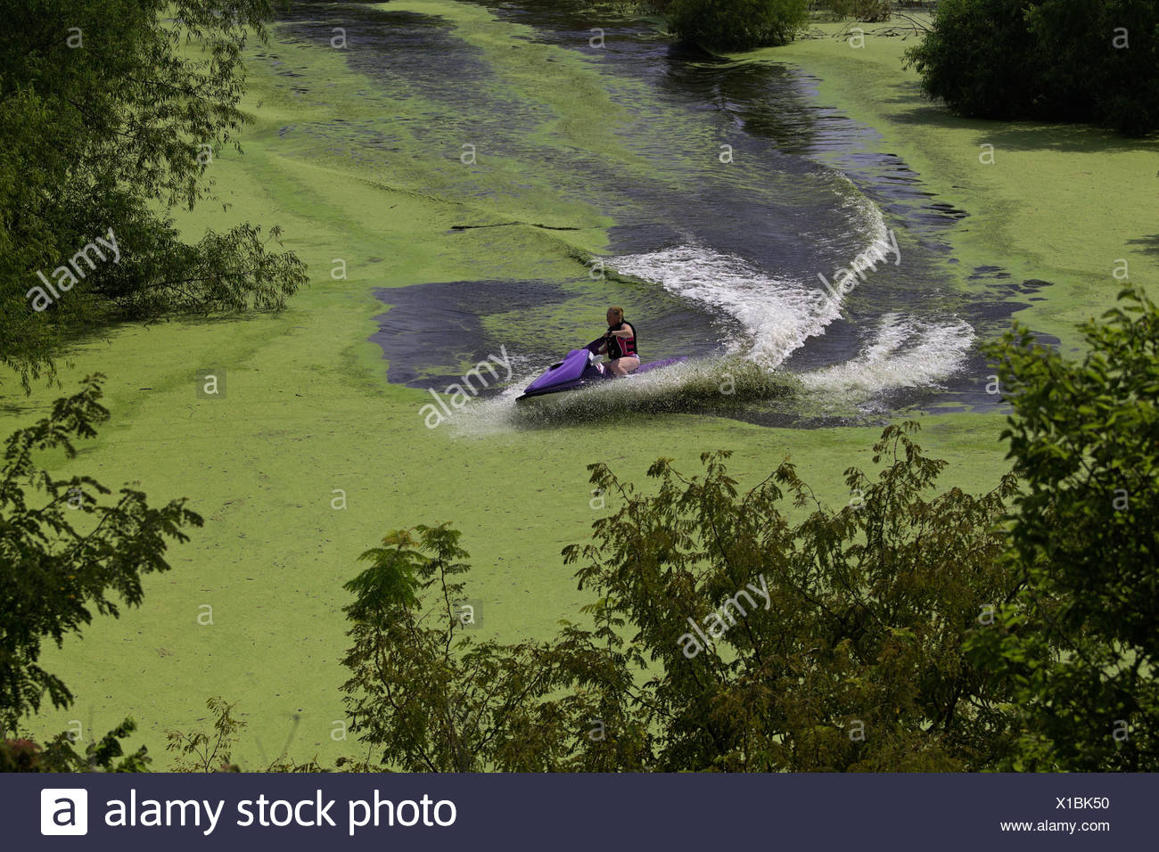 Woman rides a jet ski on a cove of Milford Lake, Kansas  that has a large algae bloom. - Stock Image