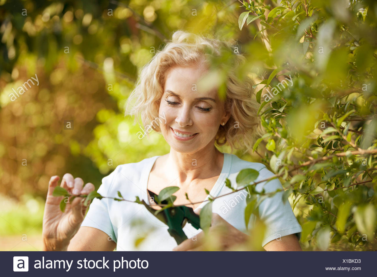 Overhanging Branch Stock Photos Amp Overhanging Branch Stock