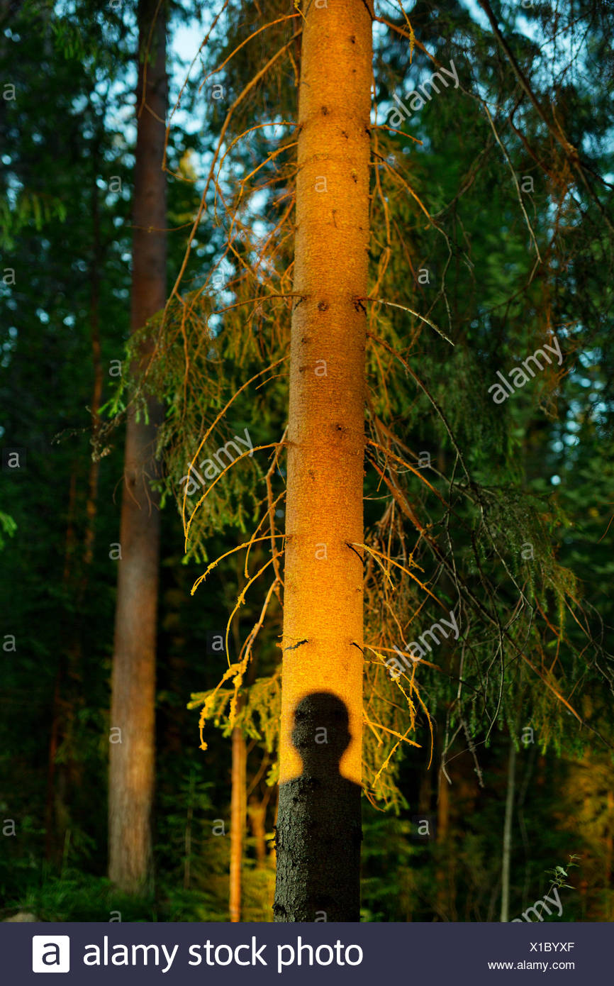 Shadow of person on spruce tree - Stock Image