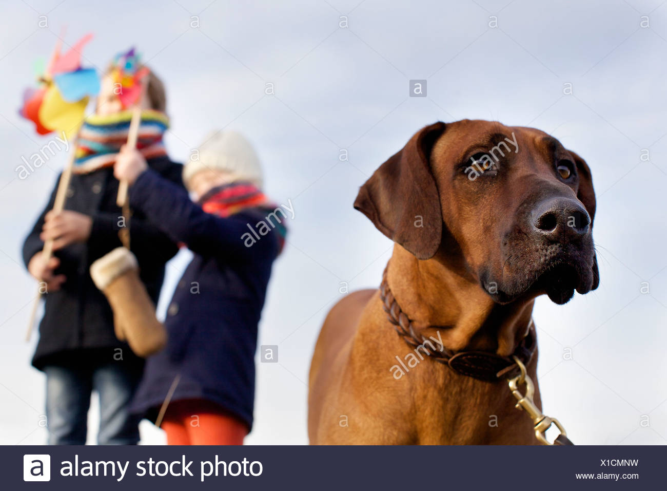 Gazing dog with boy and girl and paper windmills at coast - Stock Image