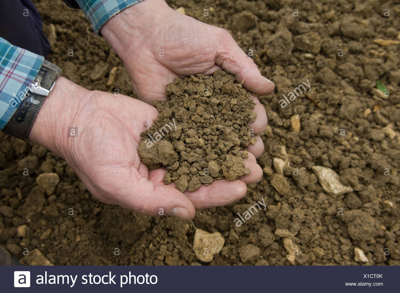 Man cupping dirt with his hands - Stock Image