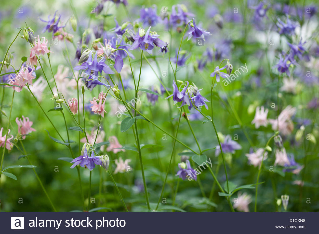 Beautiful flowers can be used for postcards - Stock Image