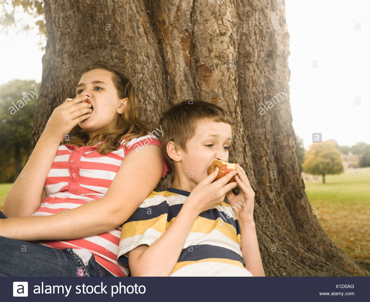 Boy and girl eating apples against tree - Stock Image