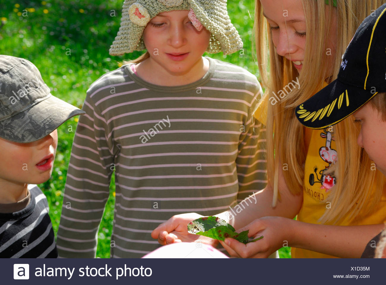 Children looking at something on a leaf, Bavarian Alps, Upper Bavaria, Bavaria, Germany - Stock Image
