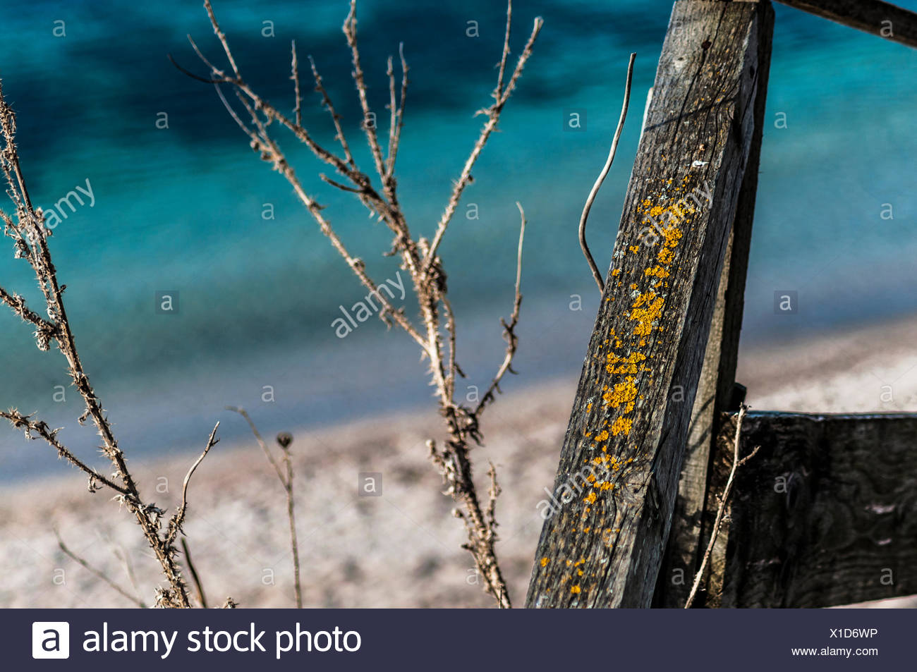 Dried Plants At Beach - Stock Image