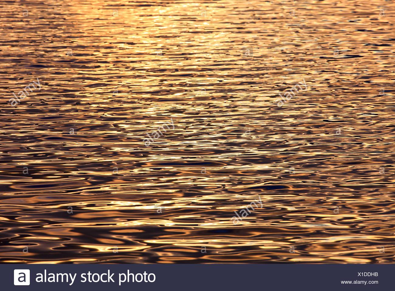 Evening, evening light, Cairngorms, detail, graphical, highlands, highland, Loch, Loch Morlich, Morlich, national park, park, re - Stock Image