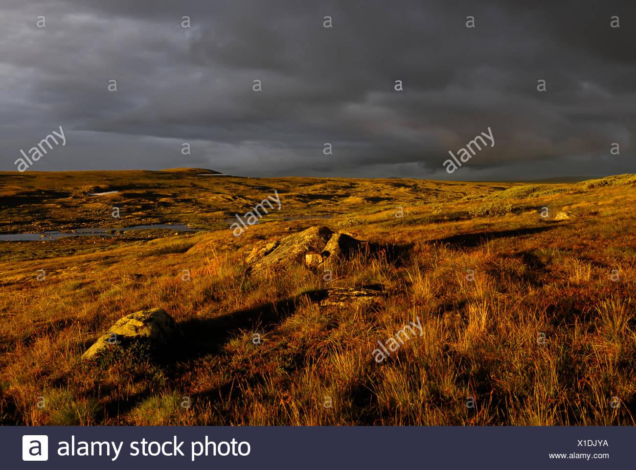 Evening light on the Hardangervidda, Hardanger Vidda, Plateaufjell and Europe's largest high plateau, Norway, Europe - Stock Image
