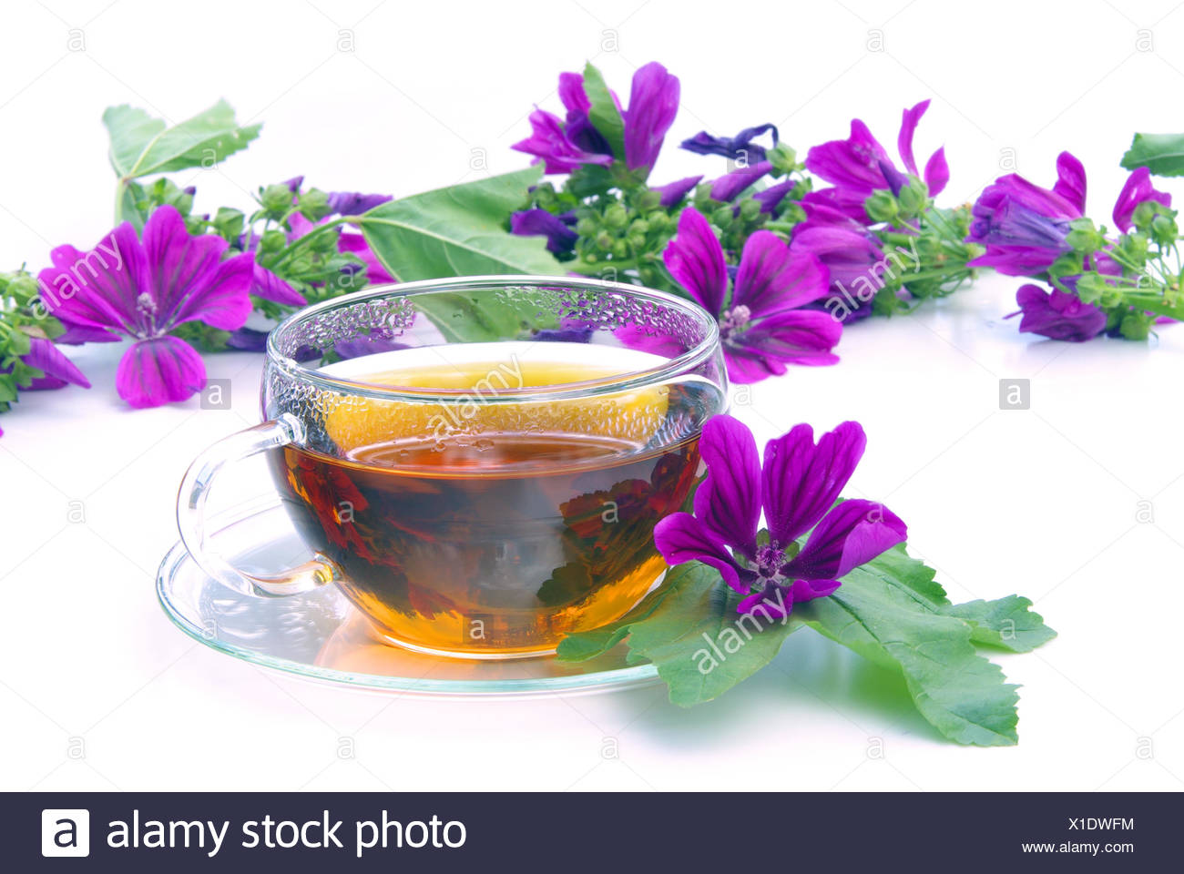 tee malve - tea malva 08 Stock Photo
