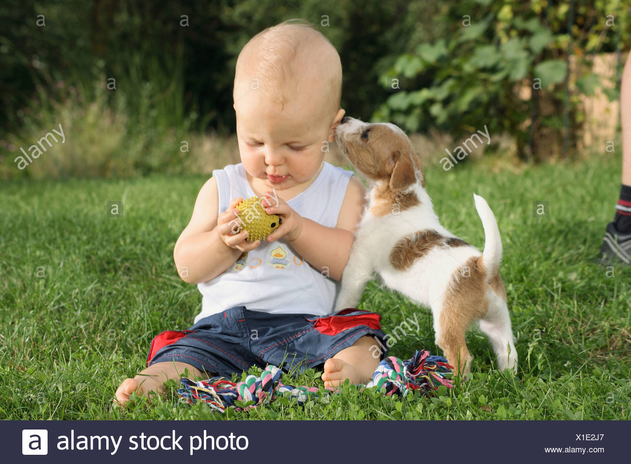 small boy with Jack Russell Terrier on meadow - Stock Image