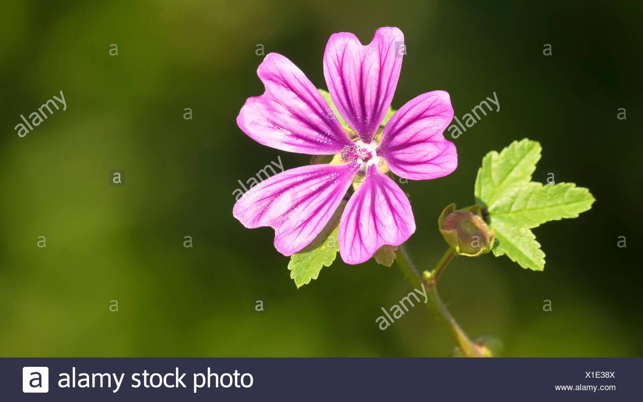 flower, plant, bloom, blossom, flourish, flourishing, medicinal plant, flower, Stock Photo