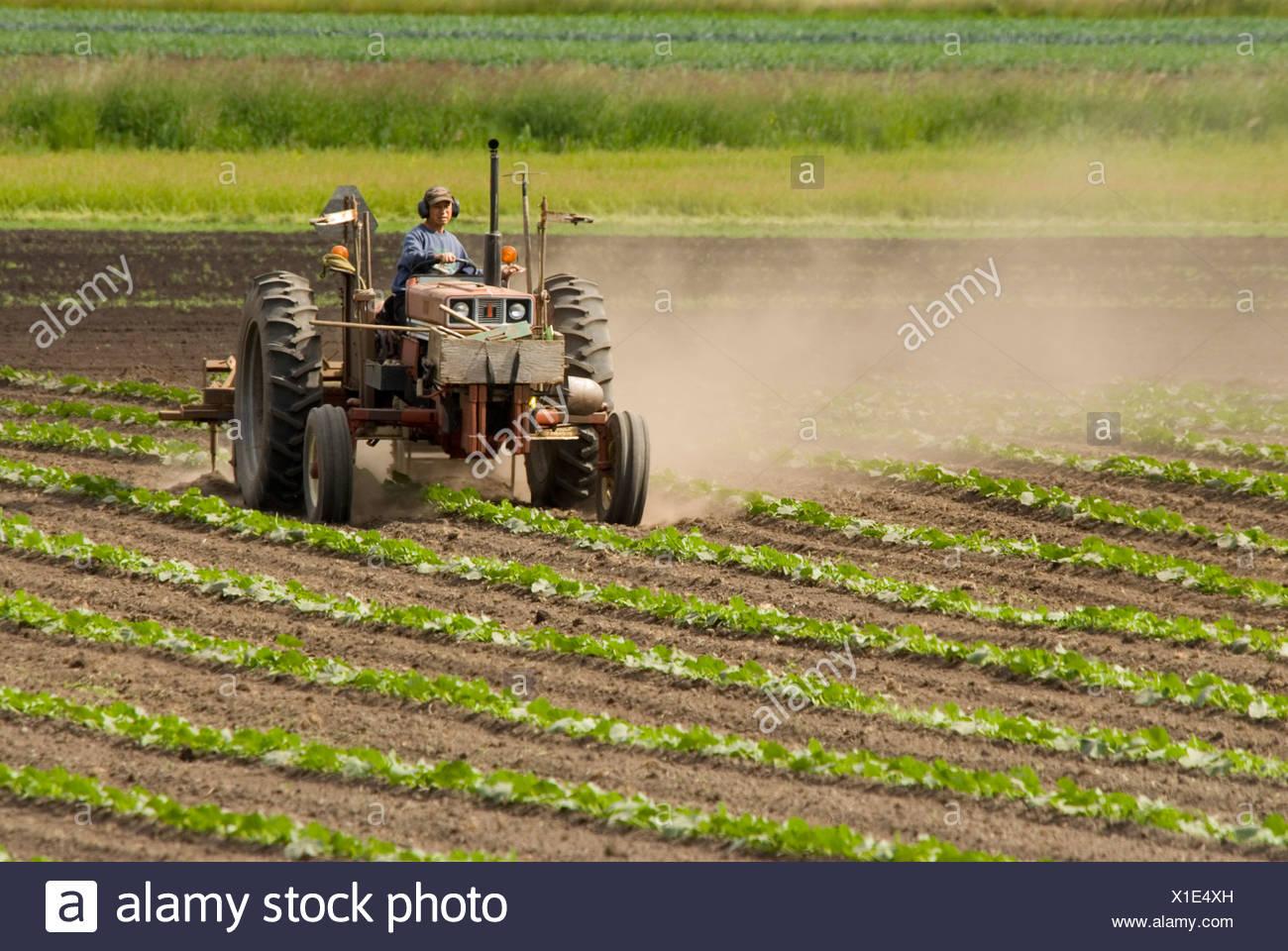 farmer driving tractor, saanich peninsula, british columbia, canada. - Stock Image