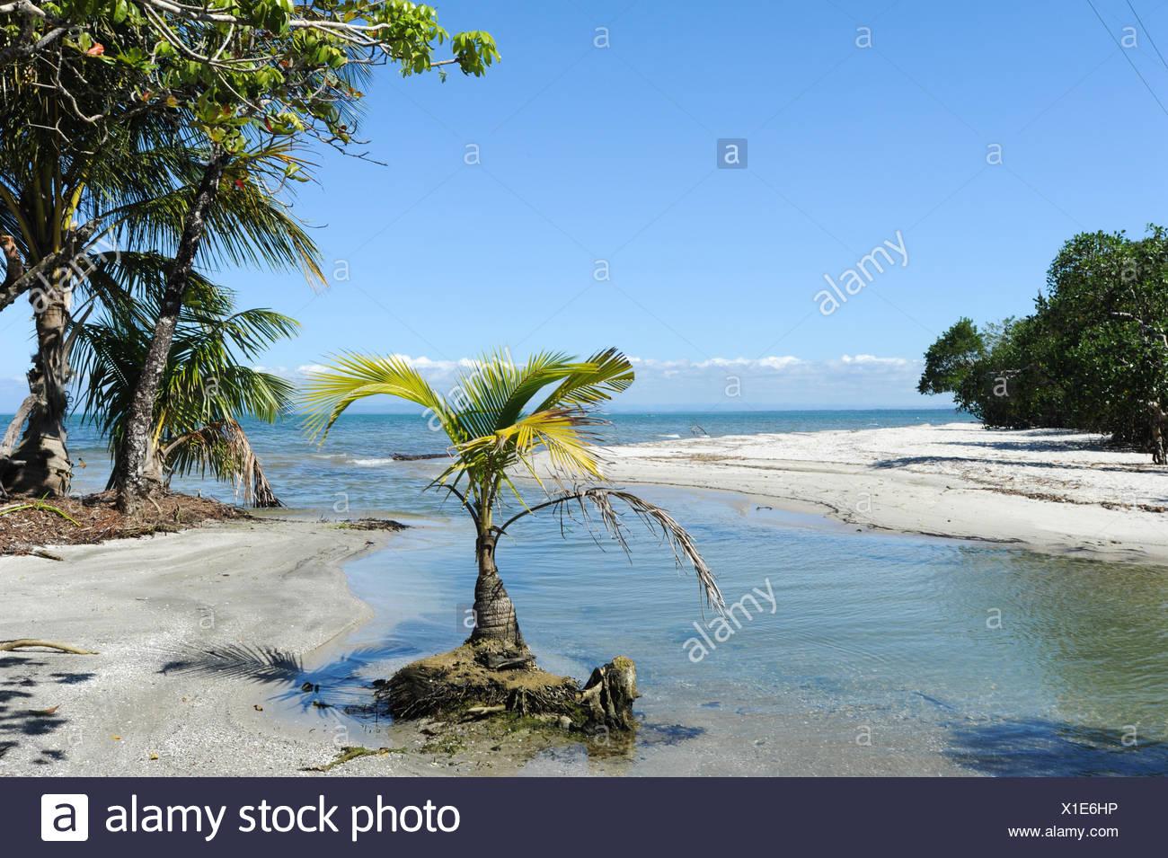 Guatemala, Central America, beach, Livingston, nature, ocean, palm trees, playa blanca, sand, scenic, trees - Stock Image