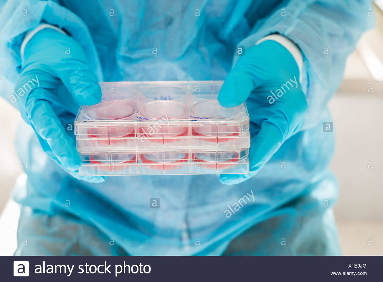 Cultures of cells in liquid medium, Biology and Research Center. - Stock Image