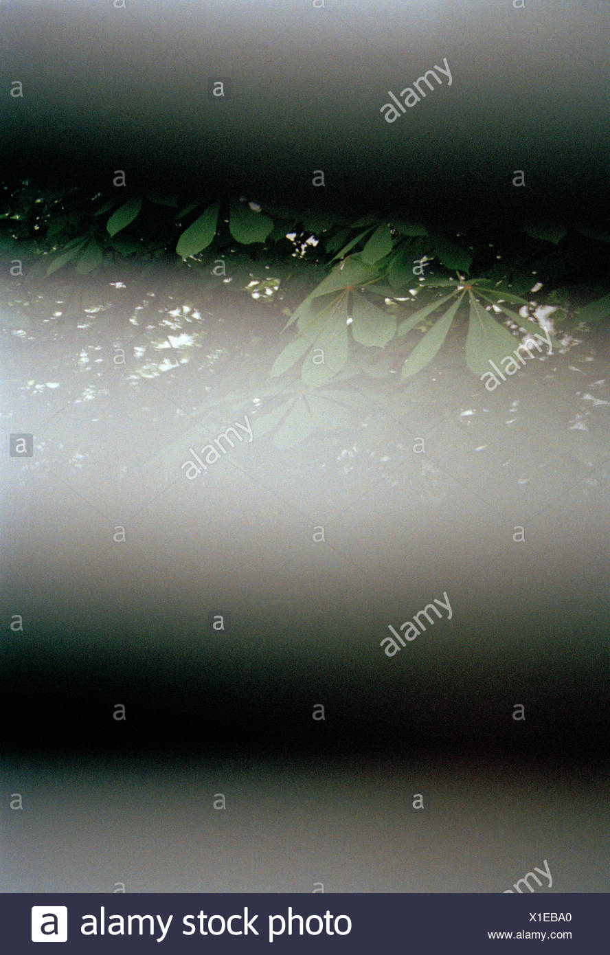 View through horizontal blinds of tree branches - Stock Image