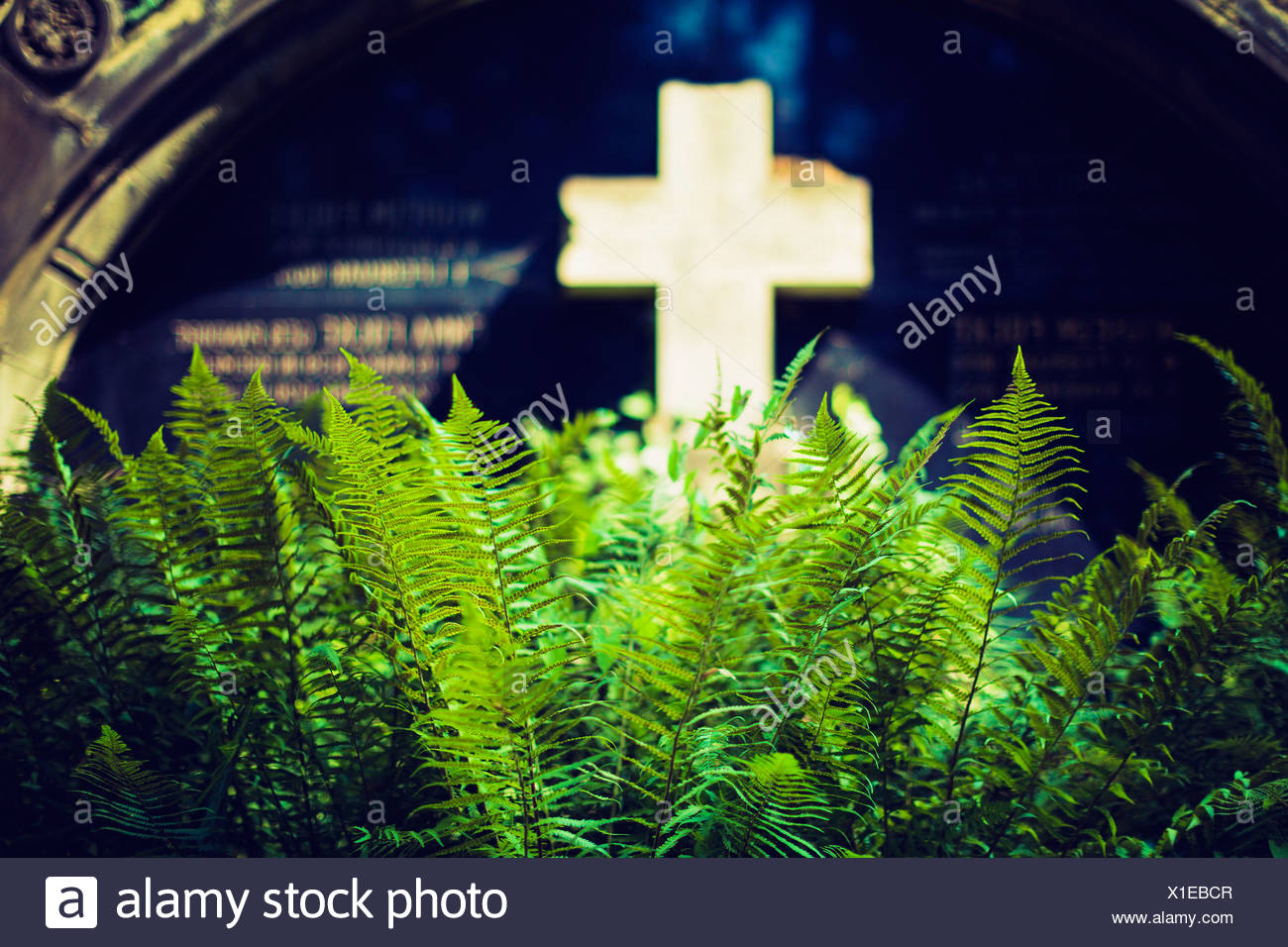 Cross in grave yard with ferns in the foreground. - Stock Image