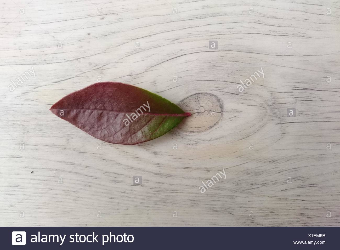 Close-Up Of Leaf On Wooden Table - Stock Image