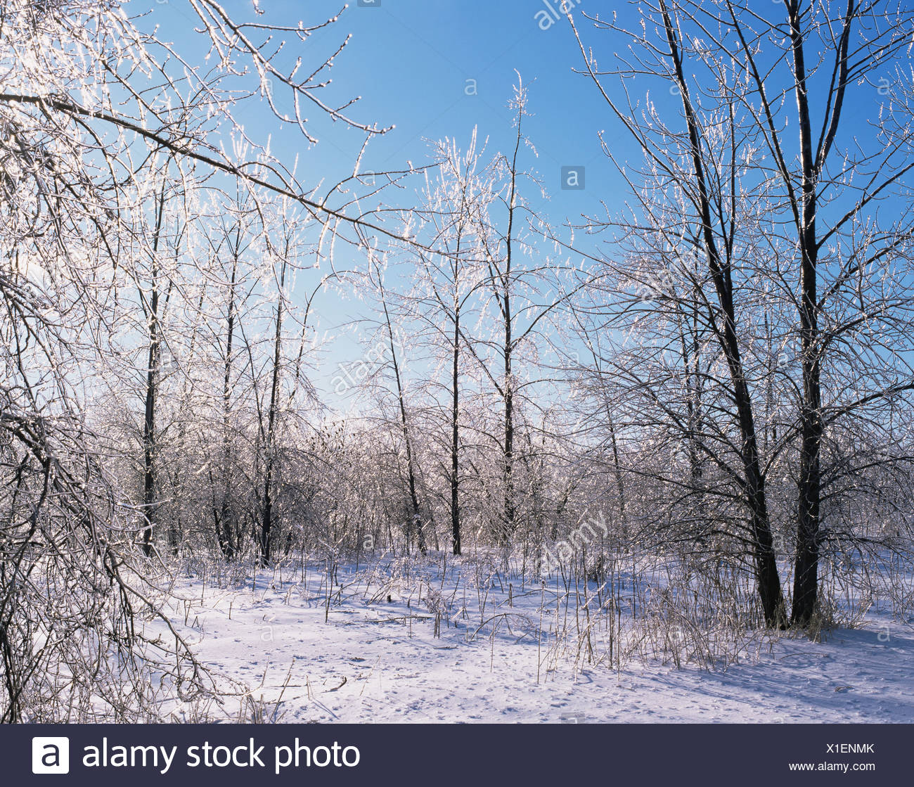 Forest in the winter Stock Photo