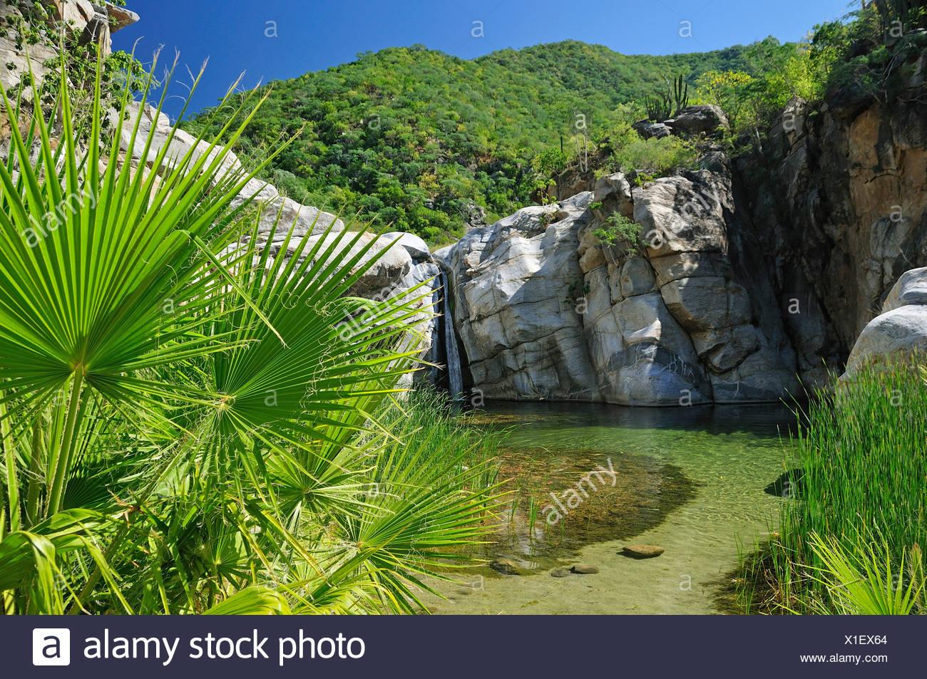 Waterfall, Canon de la Zorra, Sierra de la Laguna, Santiago, Baja California Sur, Baja, California, Sur, Mexico, Middle America, - Stock Image