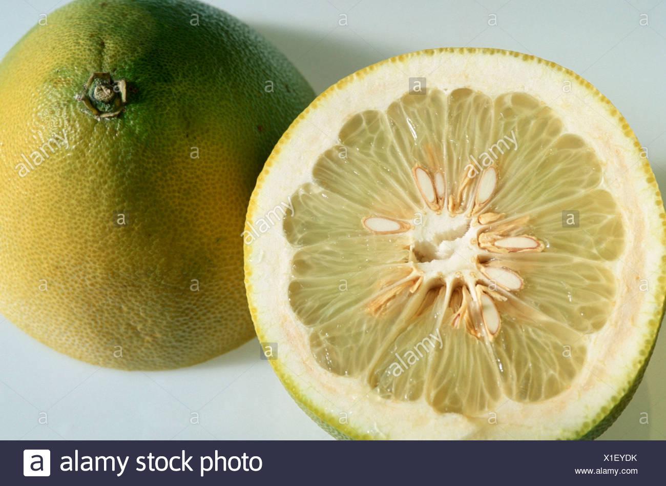 Pumelo Citrus grandis Pampelmuse Rautengewaechse Rutaceae innen Studio indoor Stock Photo