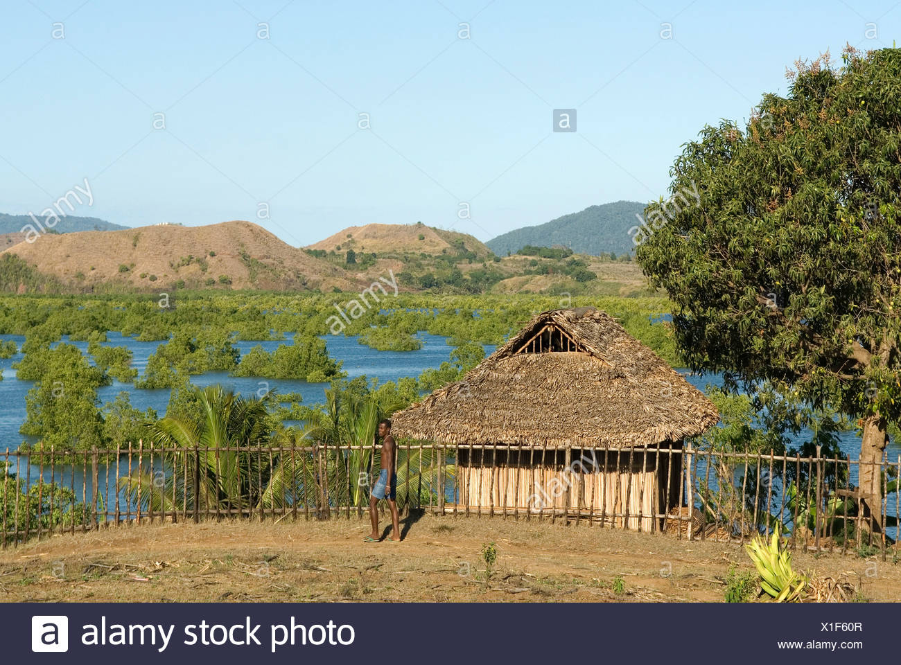 Mangrove around Hell-ville Andoany, Nosy Be island, Republic of Madagascar, Indian Ocean - Stock Image