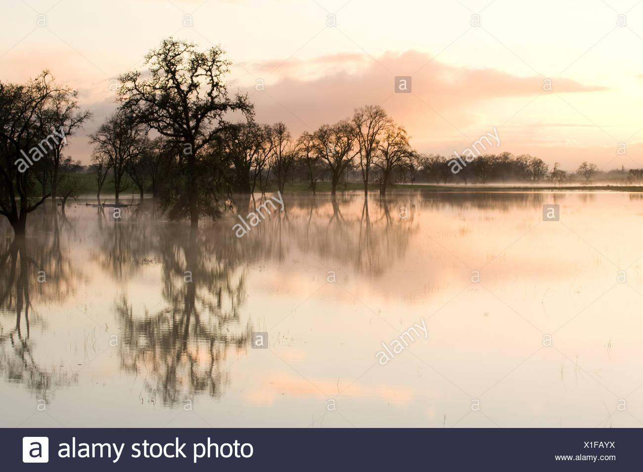 Trees and reflections in water - Stock Image