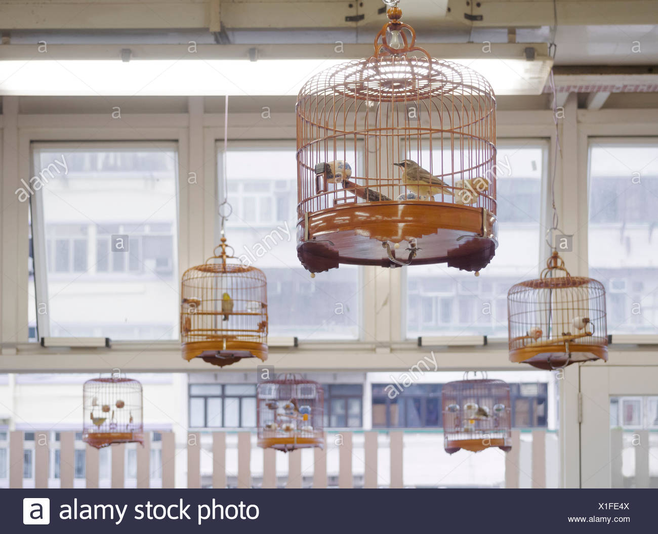 bird singing appreciation hobby - Stock Image