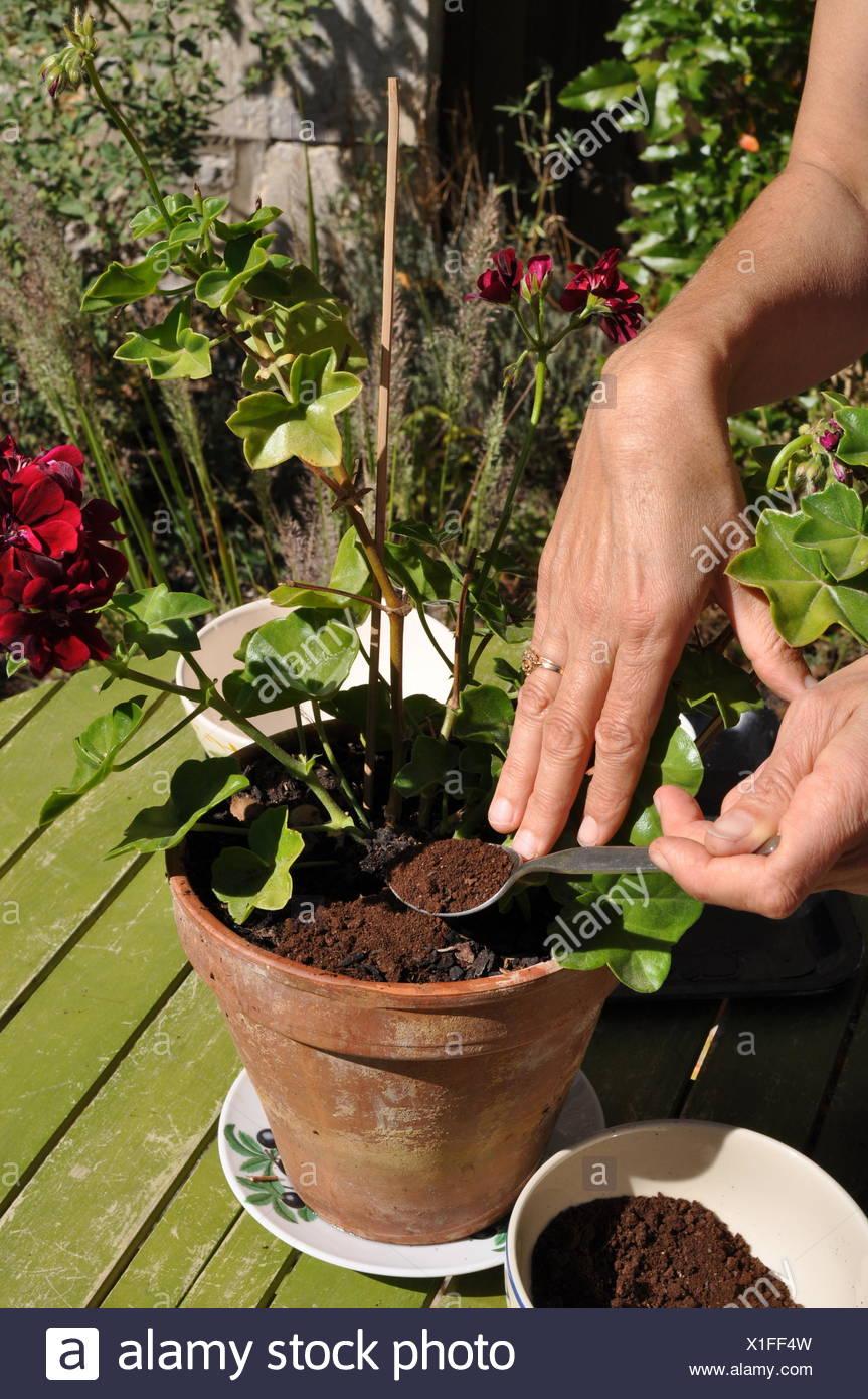 Coffee Grounds Garden Stock Photos & Coffee Grounds Garden Stock ...