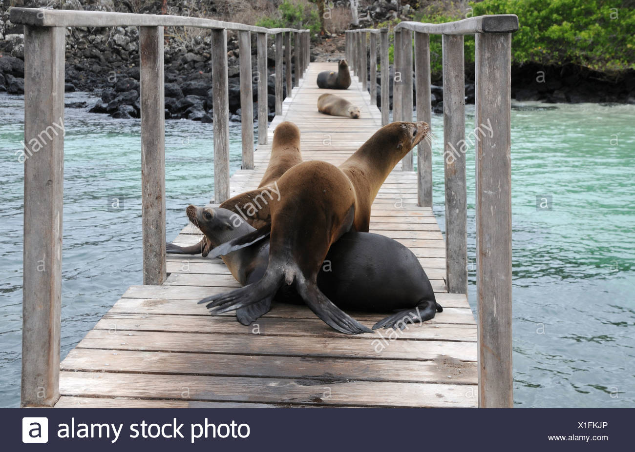 Welcome to Galapagos - Stock Image