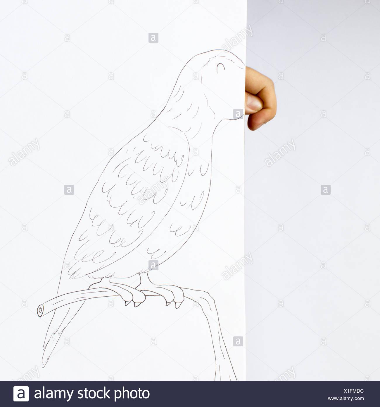 Conceptual parrot - Stock Image