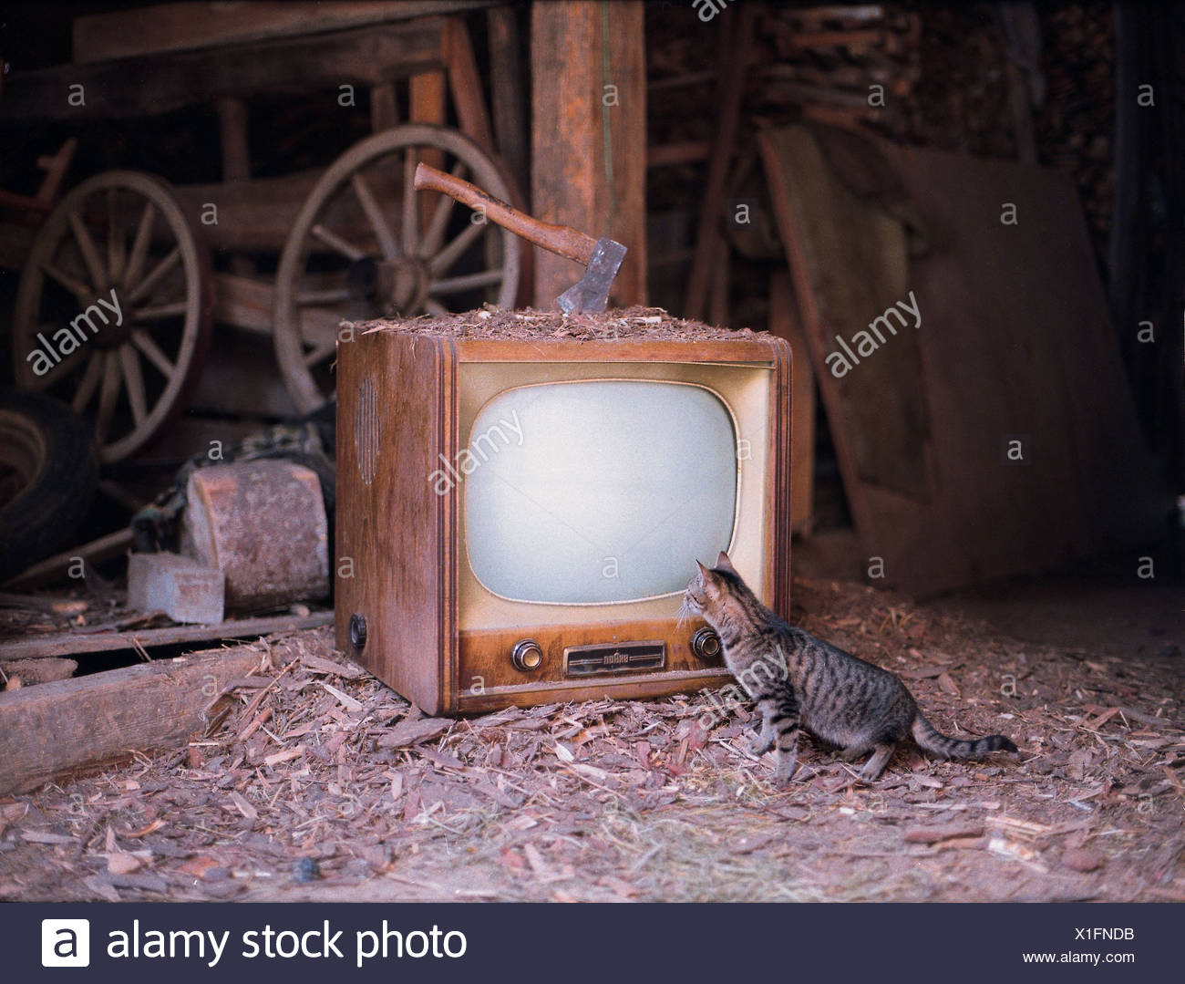 Consumer Unit Stock Photos Images Alamy History House Fuse Box Broadcast Television Set Stored In A Barn Curious Cat Is Watching At