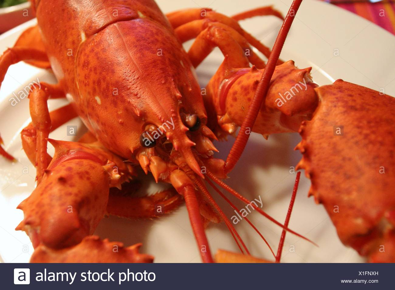 evening tendency plate lobster - Stock Image