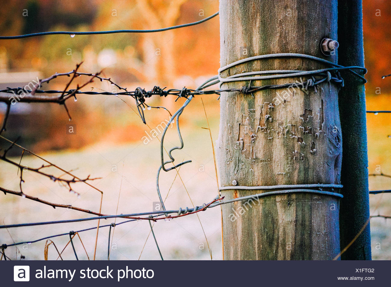 Close-Up Of Barbed Wire Fence With Wooden Post - Stock Image