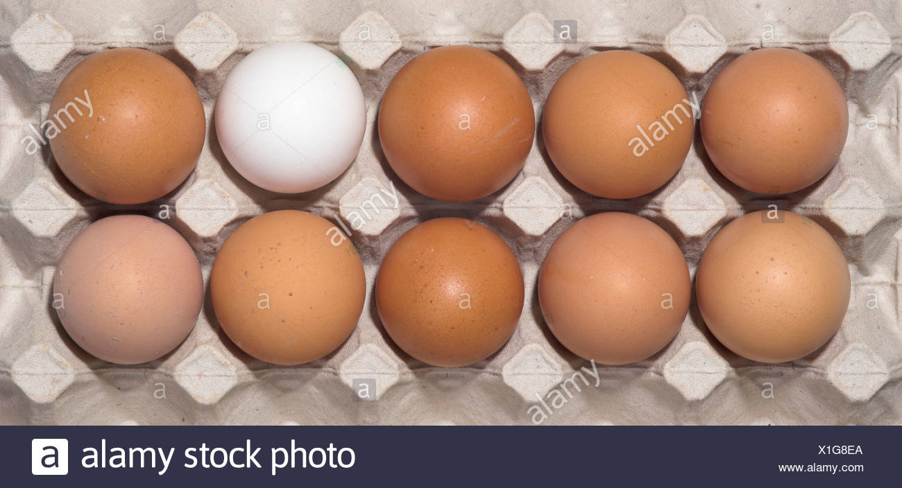 Ten chicken eggs in their package, nine brown, one white - Stock Image