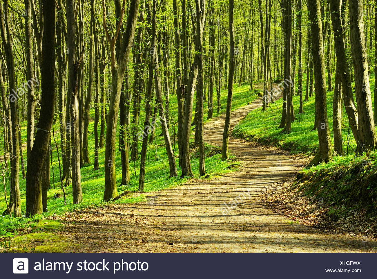 tree trees sunlight spring bouncing bounces hop skipping frisks jumping jump woods spiritual plants divine wilderness path way - Stock Image