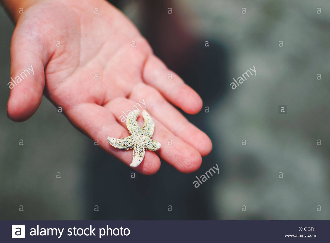 Child's hand (2-3) holding tiny star fish - Stock Image