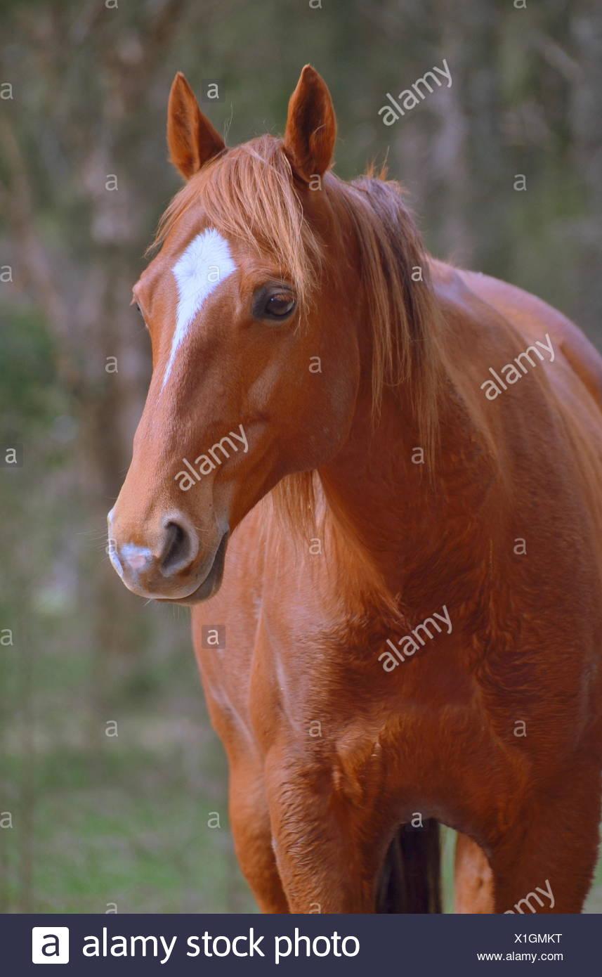 eyes gelding - Stock Image