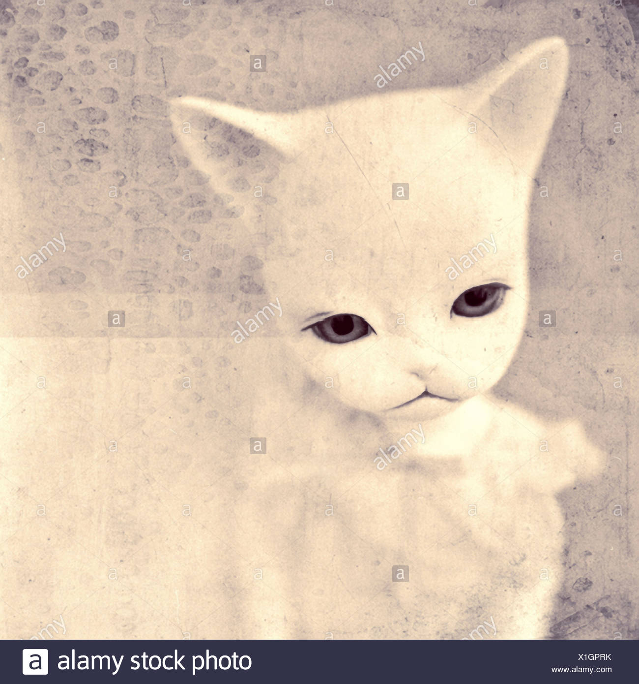 Close up of cat dolls face looking upset - Stock Image