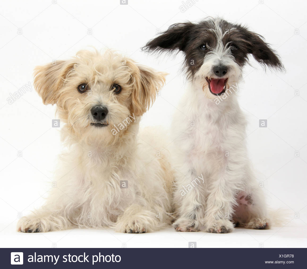 Animal Poo Stock Photos & Animal Poo Stock Images - Alamy
