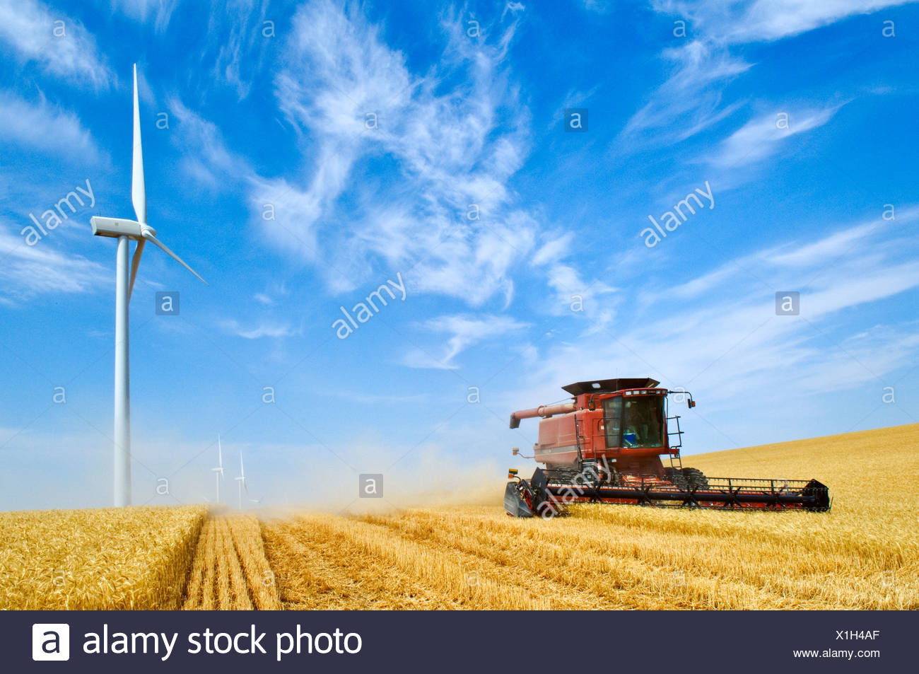 A Case IH combine harvests wheat with three large wind turbines along the perimeter of the field / Washington, USA. - Stock Image