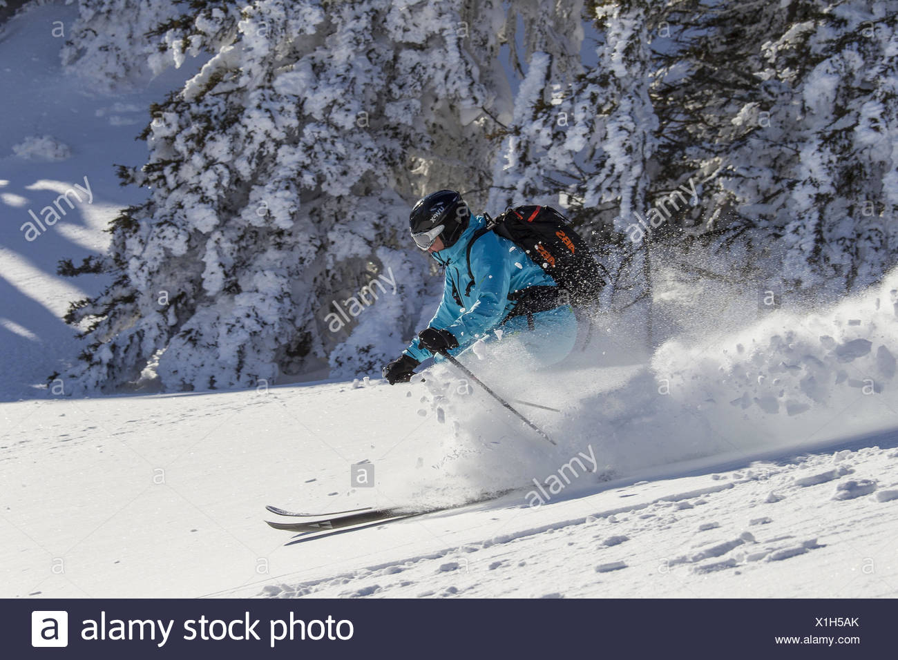 Skier with backpack, going downhill in front of snow-covered trees, - Stock Image