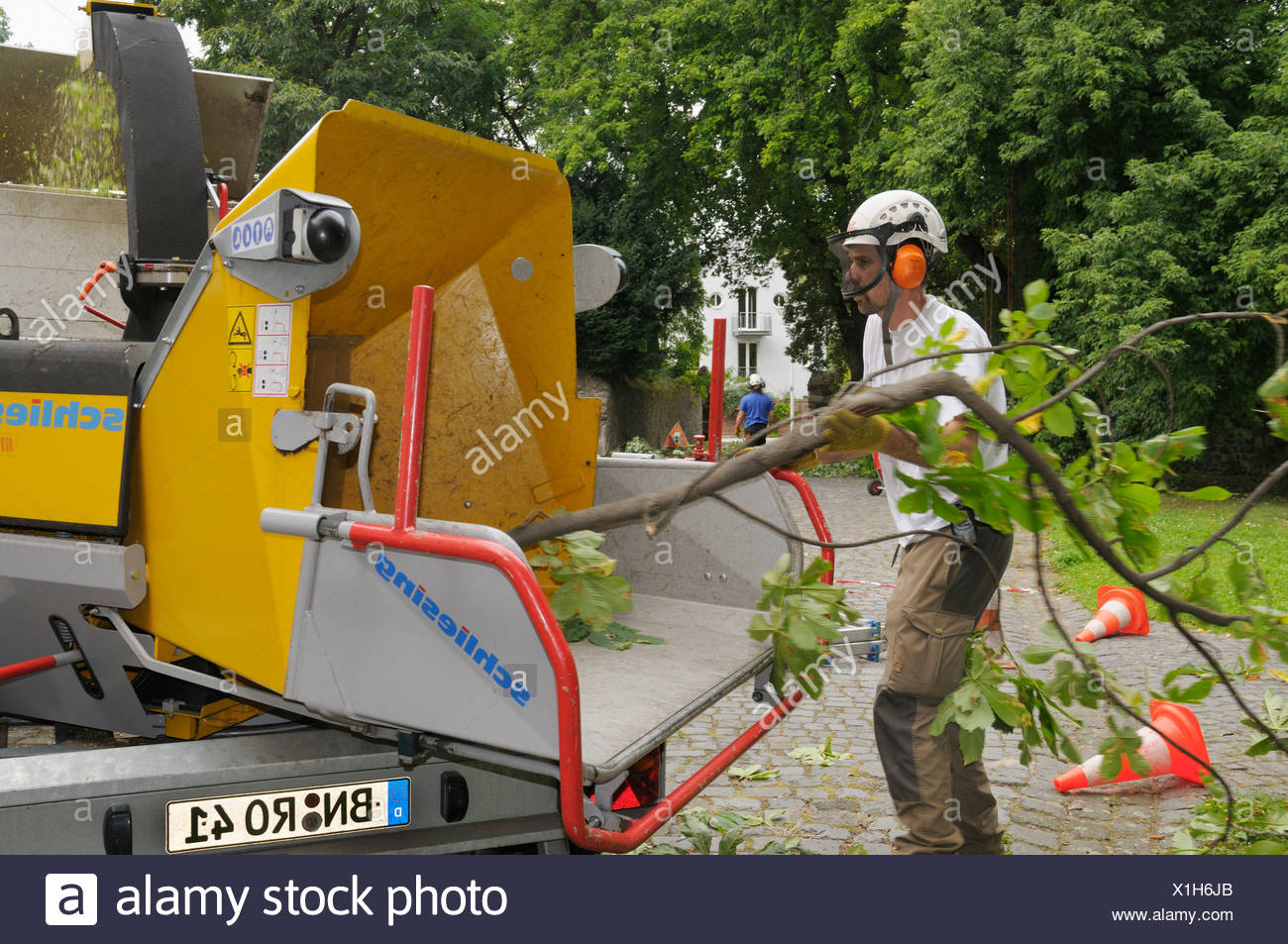 Arborist wearing safety clothing pushing a branch into a shredder - Stock Image