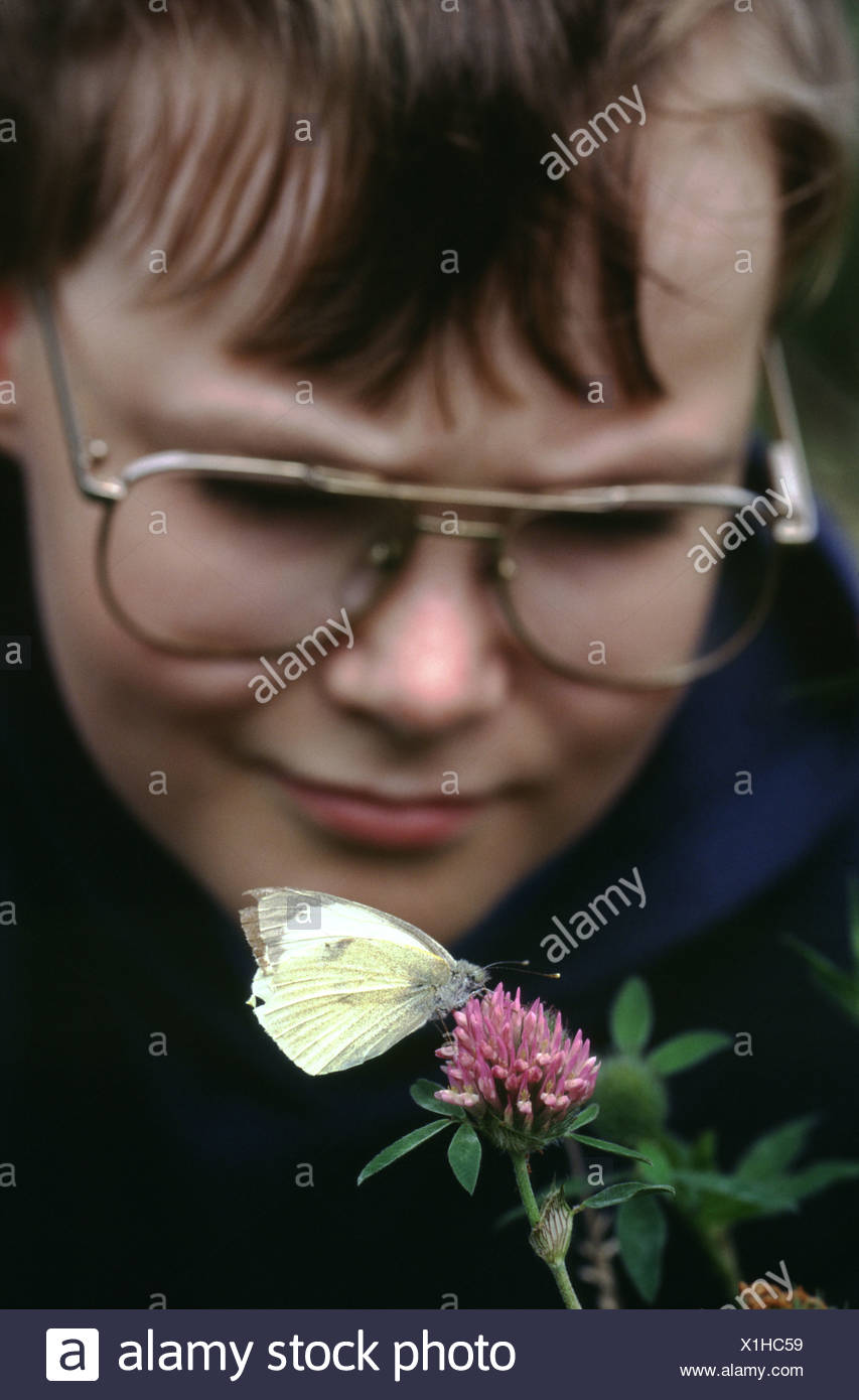 Boy wearing glasses looking closely at butterfly on flower wildlife garden Scotland - Stock Image