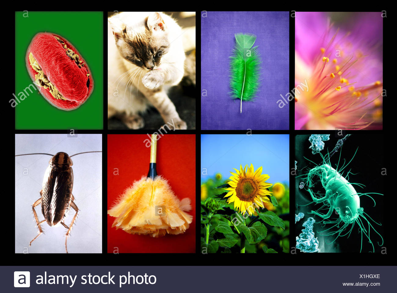 Allergens responsible for respiratory allergies. - Stock Image