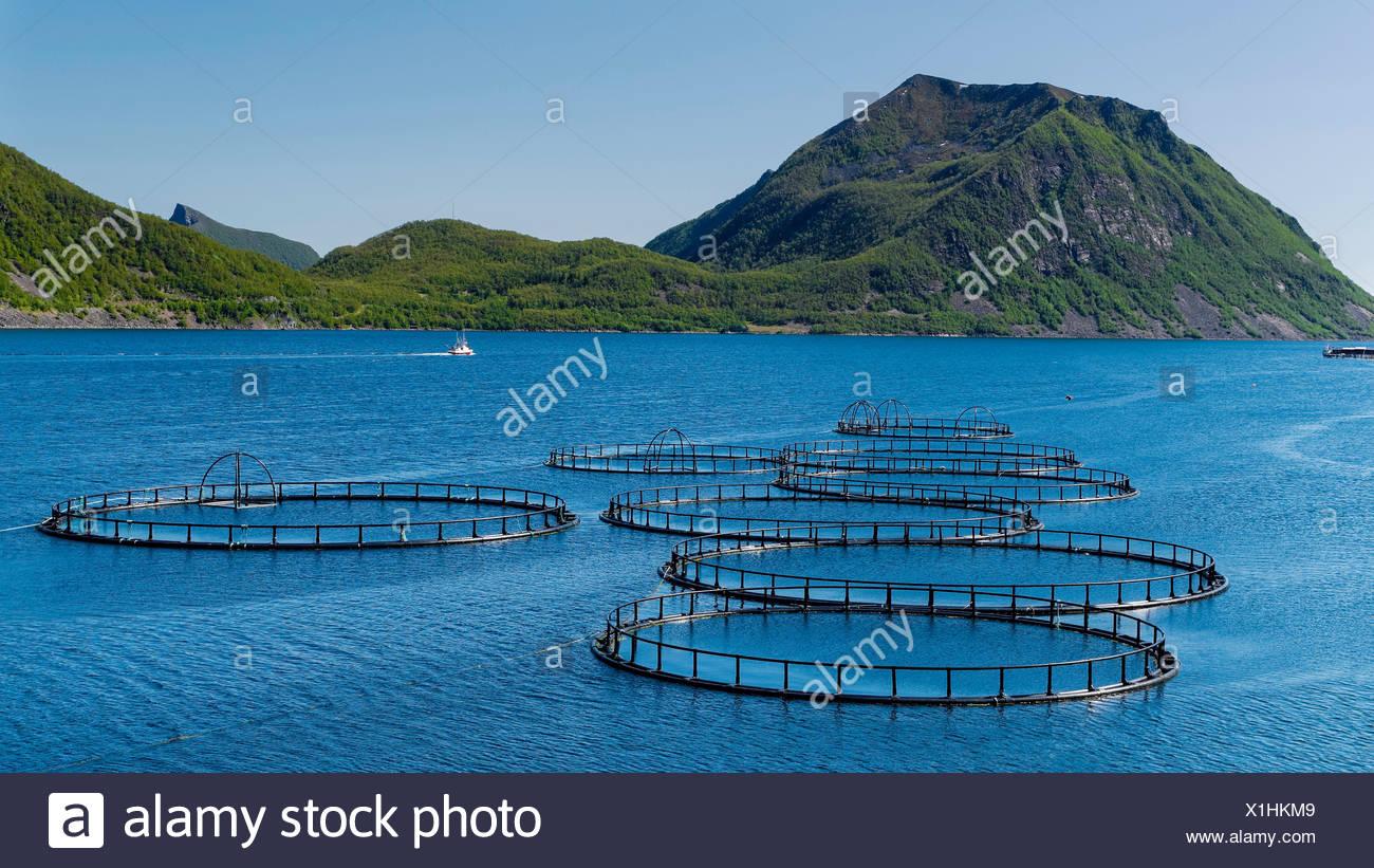 Fish, pisciculture, fjord, mountains, coast, costal, range, salmon, salmon breeding, scenery, landscape, sea, North Sea, Norway, - Stock Image