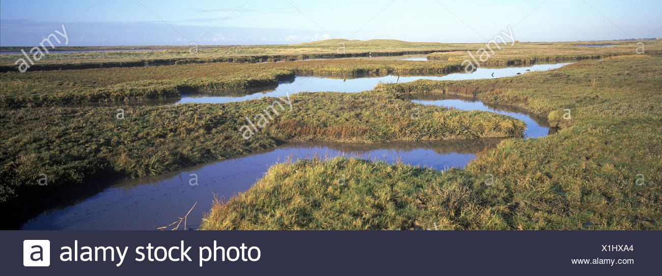 Estuaries-Salt Marsh Saltmarsh at Simpsons Saltings - Suffolk Wildlife Trust - Stock Image