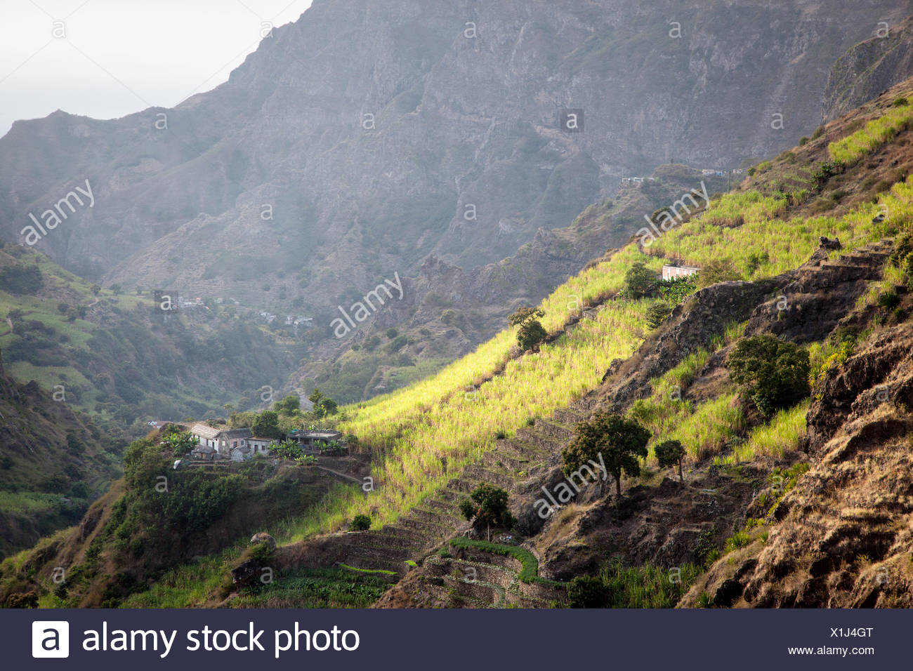 Lush green rice fields on the mountainsides of San Antao Island. - Stock Image